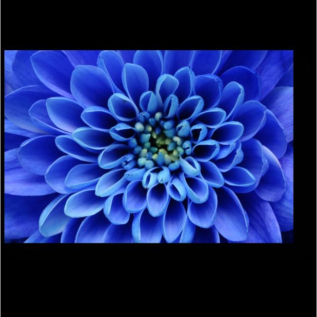 Модульная картина В сердце синего