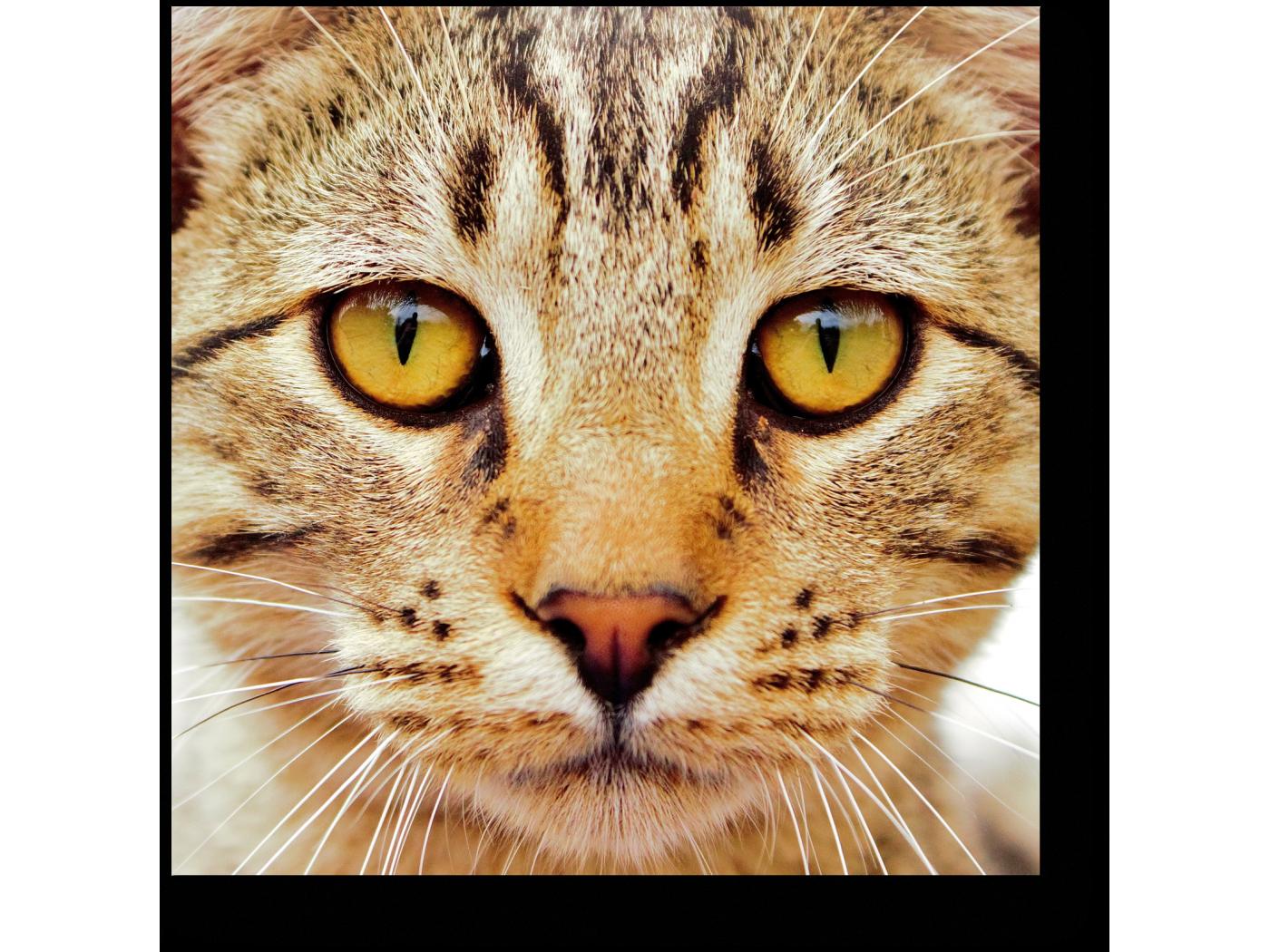 Как на фото сделать лицо кота