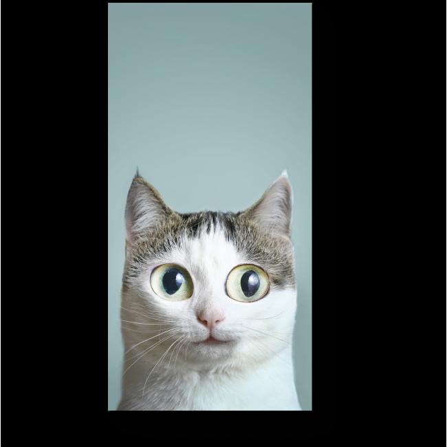 Модульная картина Удивленный кот