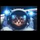 Кот-космонавт