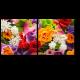 Буйство цветочных красок