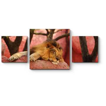 Модульная картина Африканский лев отдыхает