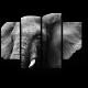Портрет слона