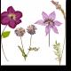 Искусство гербария