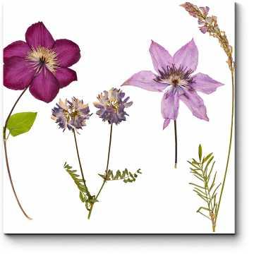 Модульная картина Искусство гербария