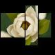 Красота цветка магнолии