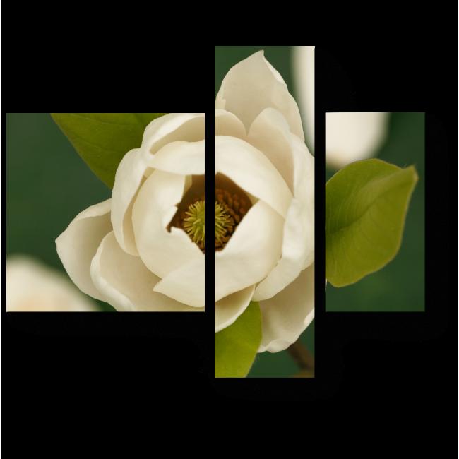 Модульная картина Красота цветка магнолии