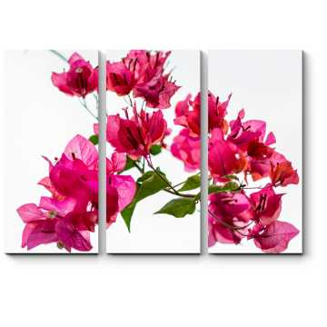 Модульная картина Розовая бугенвиллея
