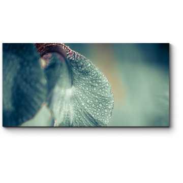 Капли дождя на ирисе