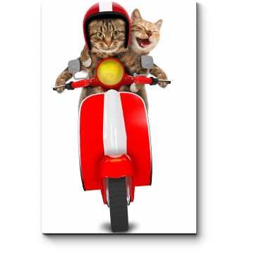 Коты на мопеде