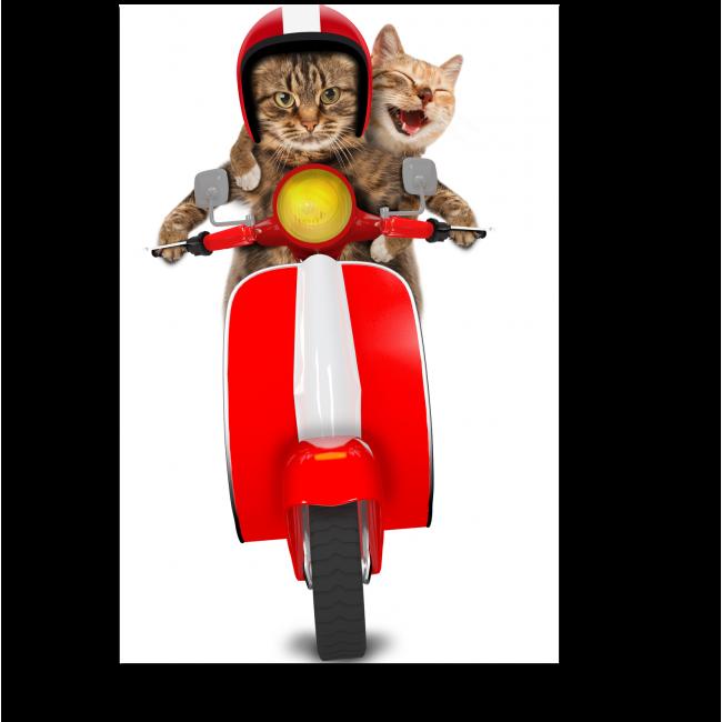 Модульная картина Коты на мопеде