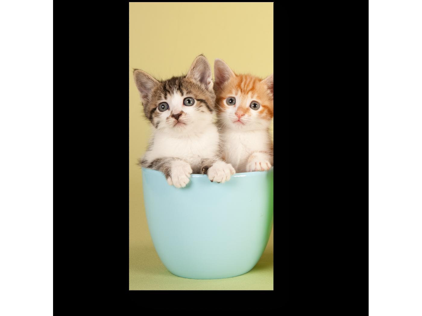 Модульная картина 6 милых котят (20x40) фото