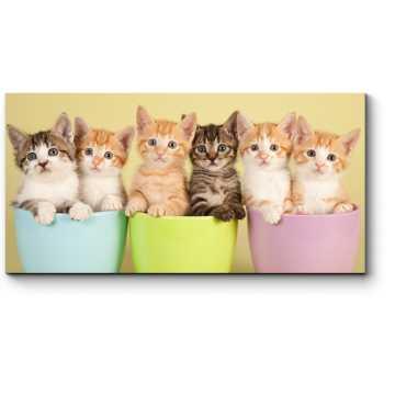 6 милых котят