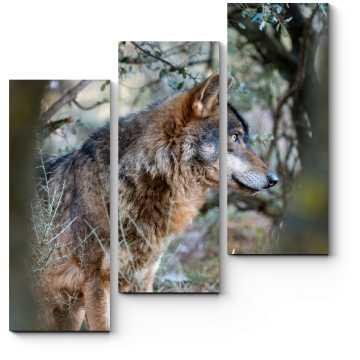 Модульная картина Волк спрятался между деревьями