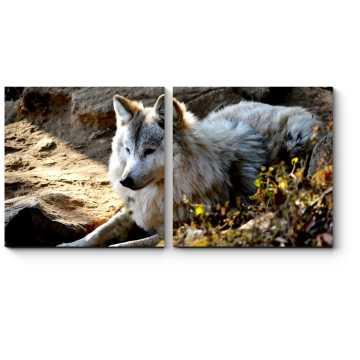 Гималайский волк
