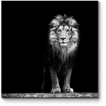 Портрет льва в темноте