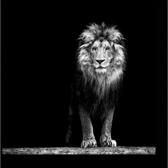 Модульная картина Портрет льва в темноте