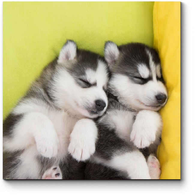 Модульная картина Щенята хаски сладко спят в обнимку