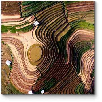 Рисовые поля с высоты птичьего полета
