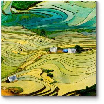 Рисовые поля в провинции Вьетнама