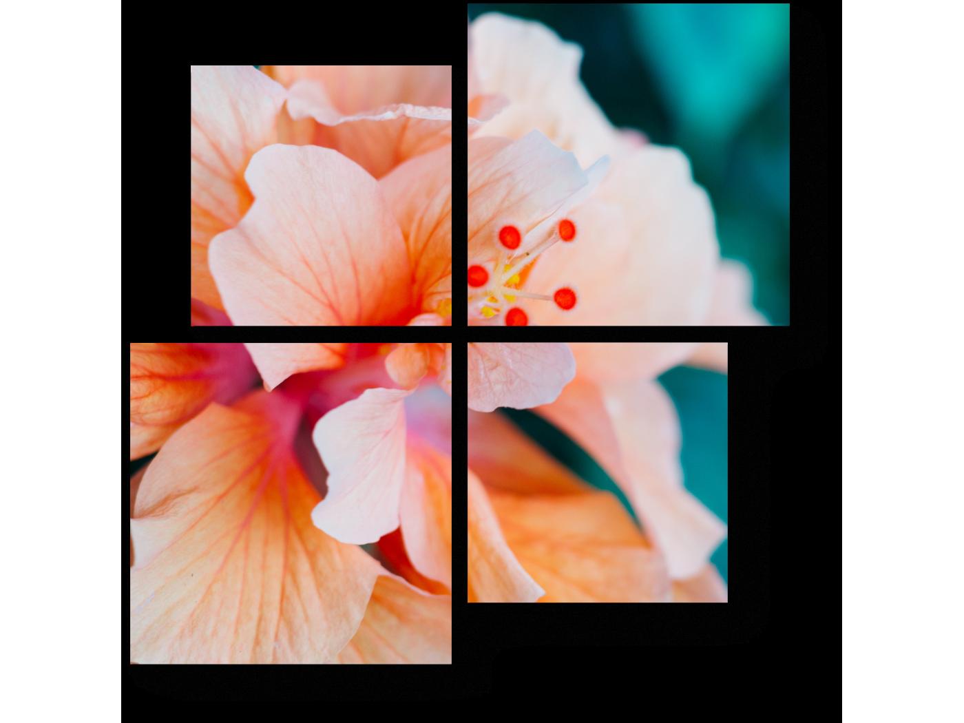 Модульная картина Макро цветок (50x50) фото