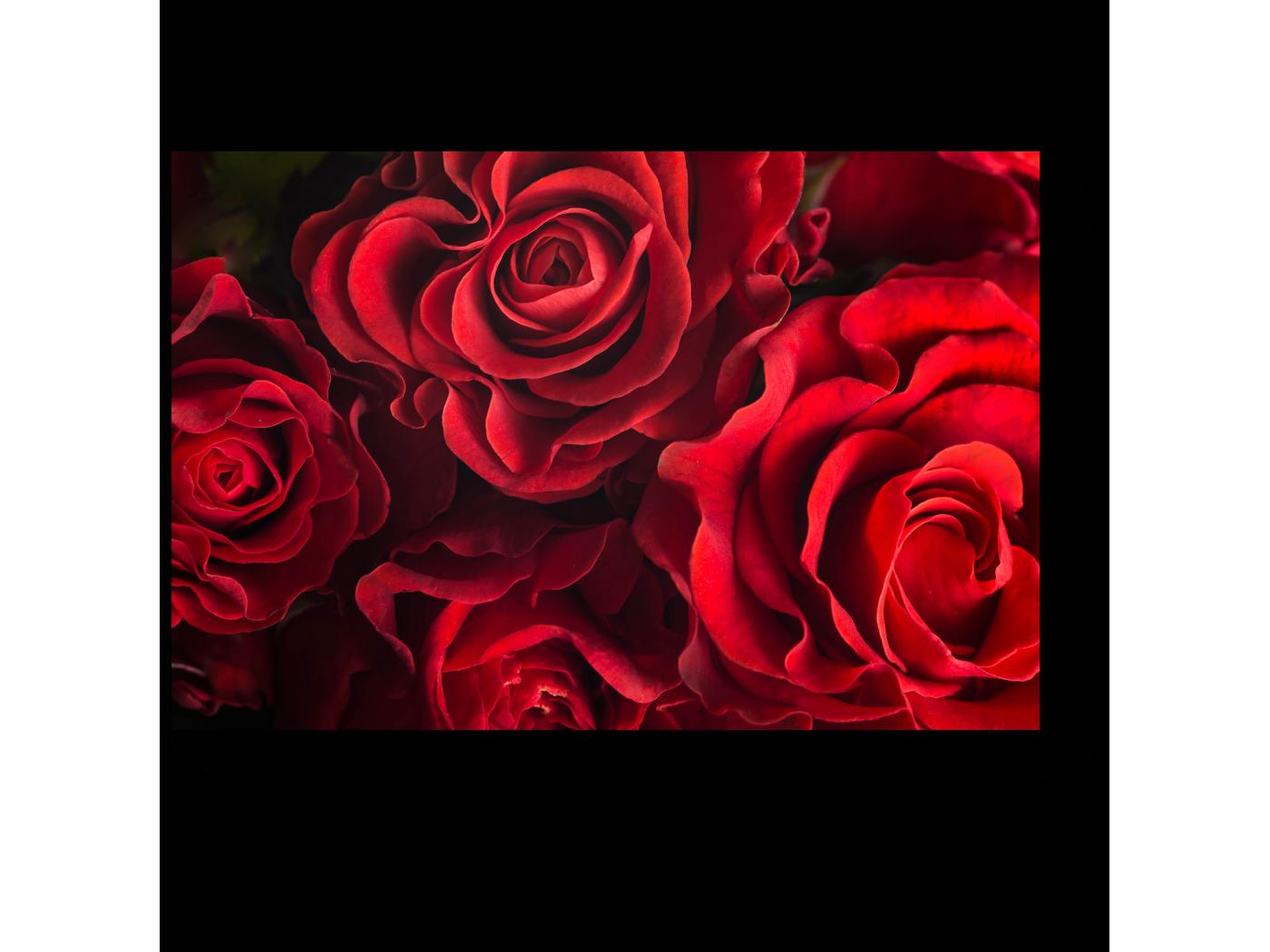 Модульная картина Бархатные розы (30x20) фото