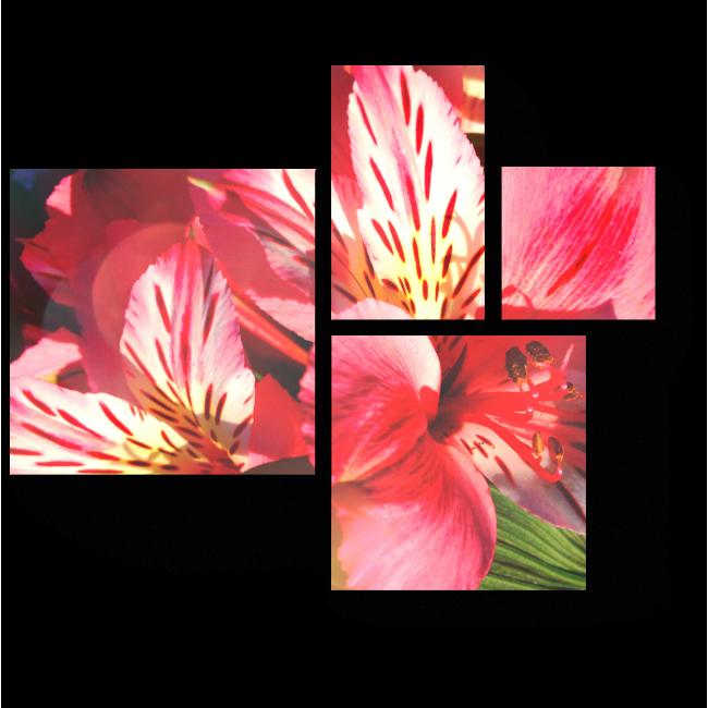 Модульная картина Весенняя нежность цветов