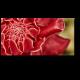 Сердце тропического цветка