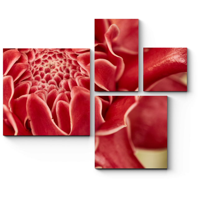 Модульная картина Сердце тропического цветка