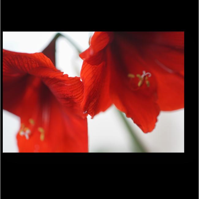 Модульная картина Красные цветы