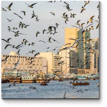 Чайки на над бухтой Дубая