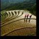 Рисовая терраса в Гуйлинь, Китай