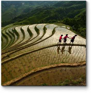 Модульная картина Рисовая терраса в Гуйлинь, Китай