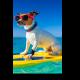 Собака - серфингист в модных очках