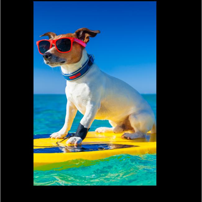 Модульная картина Собака - серфингист в модных очках