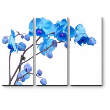 Модульная картина Орхидея небесного цвета
