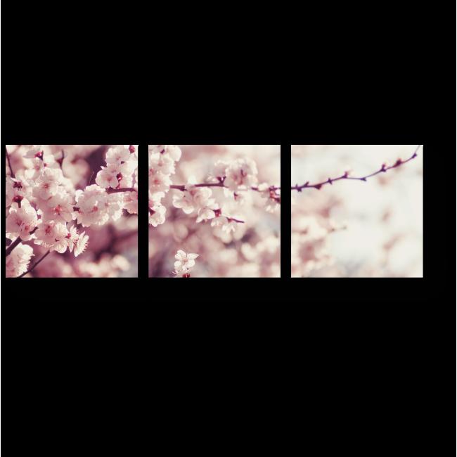 Модульная картина Сакуры зацвели