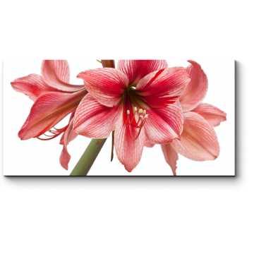 Соблазнительный цветок