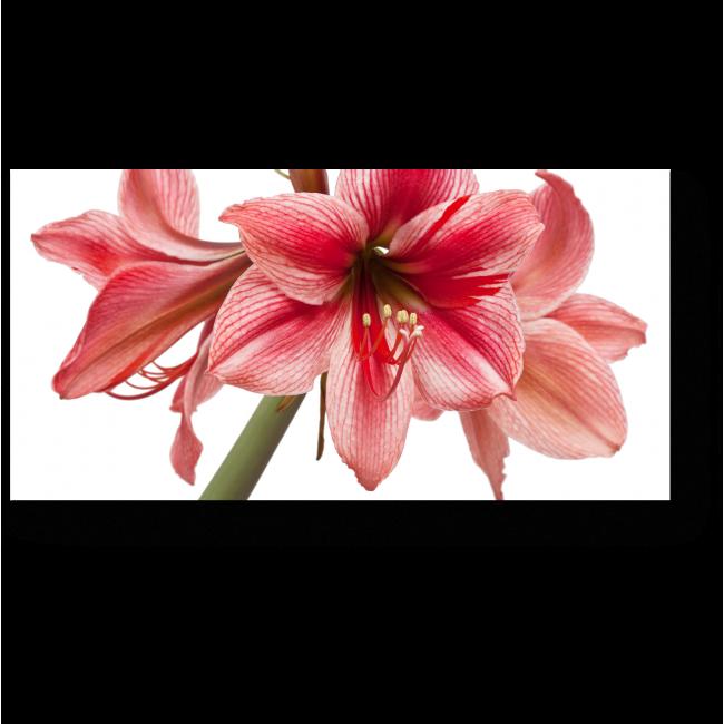Модульная картина Соблазнительный цветок