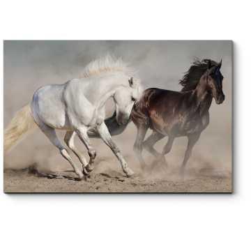 Красивая пара лошадей