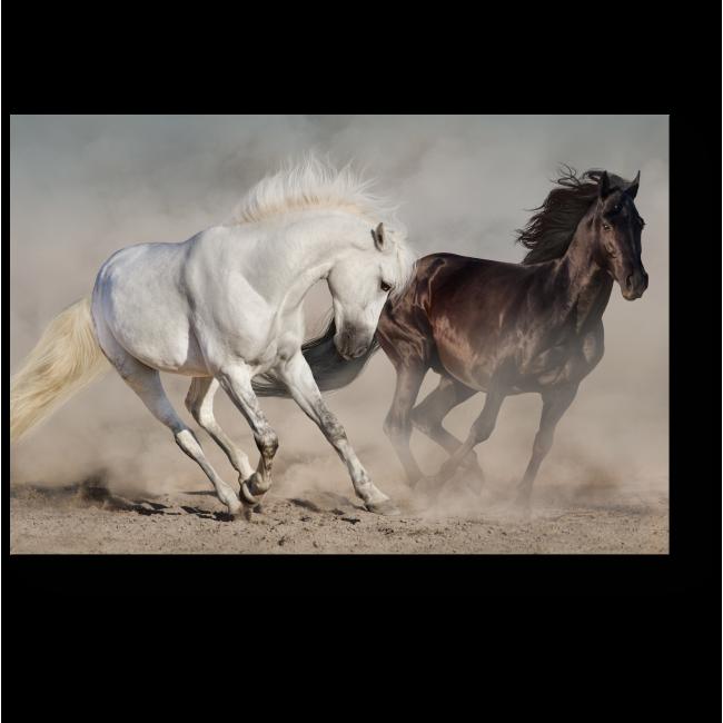 Модульная картина Красивая пара лошадей