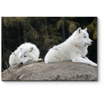 Модульная картина Волк прилег отдохнуть