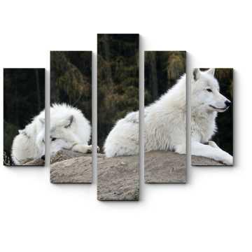 Волк прилег отдохнуть