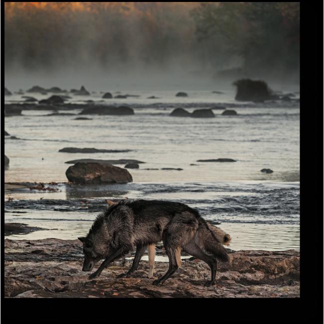 Модульная картина Прогулка вдоль реки