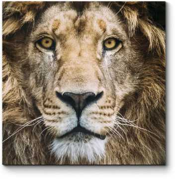 Мечтательный лев
