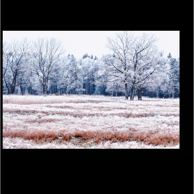 Модульная картина Зимний снежный лес