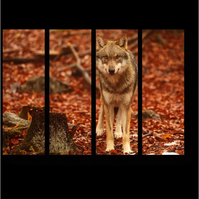 Модульная картина Волк в осеннем лесу