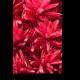 Красные тропические цветы