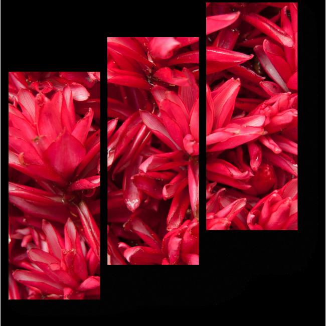 Модульная картина Красные тропические цветы