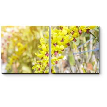 Цветок Таиланда